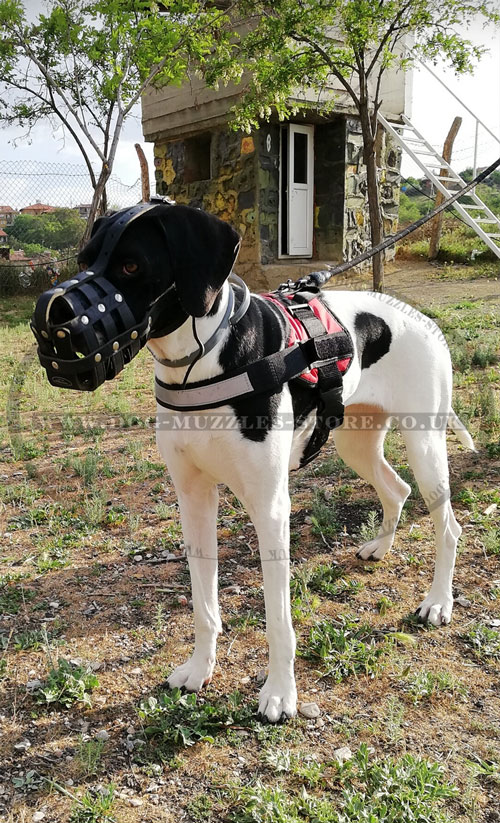 leather dog muzzle for Great Dane