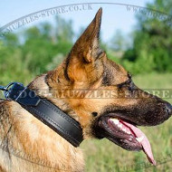 Best Classic Dog Collar for German Shepherd Dog Comfort