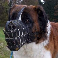St Bernard Muzzle Best Choice for Big Dog Breeds, Daily Use