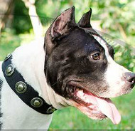 Staffie Collar UK Vintage Style | Staffie Collar for Sale UK