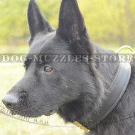 Super Strong Dog Collar for GSD, 2 Ply Leather!