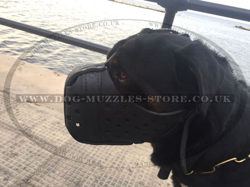 leather muzzles for Rottweiler online