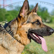 Luxury Dog Collars for German Shepherd Dog Breed Style