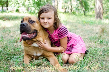 therapy dogs for kids