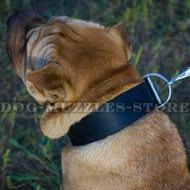 Extra Wide Leather Dog Collar for Shar Pei Size