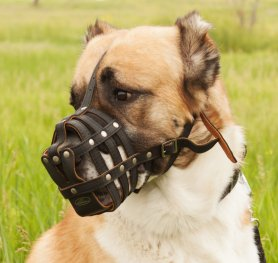 The training of a dog to a muzzle